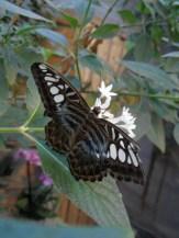la-serre-aux-papillons-44
