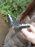 la-serre-aux-papillons-78