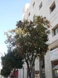 Petah Tikva - Tel Aviv (16)