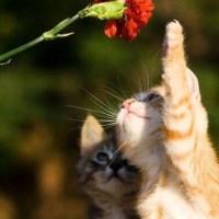"""""""- on se sent d'humeur florale, aujourd'hui-"""" et vous ?"""