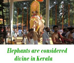 Elephants are considered divine in Kerala