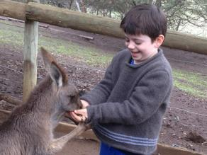 a kangaroo holding my sons hands at the Bonorong Wildlife Sanctuary while he feed it so he wouldn't stop and feed another kangaroo, my son thought it was hysterical!