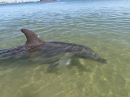 The Bunbury Dolphins