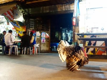 Bangkok, Straße, Pute