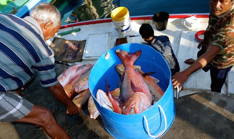 Red Snapper, Fischer im Hafen von Male