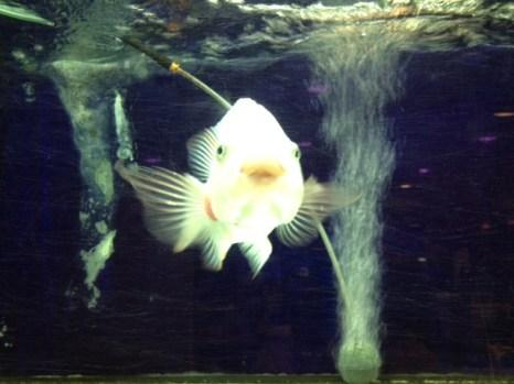 Fisch, Aquarium, Singapur