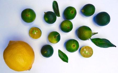 kalamansi-zitrusfrucht-der-philippinen