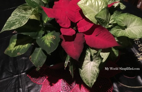 Amy plant