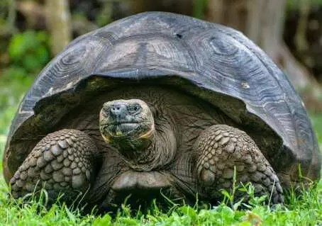 THE TORTOISE AND THE DRUM 1