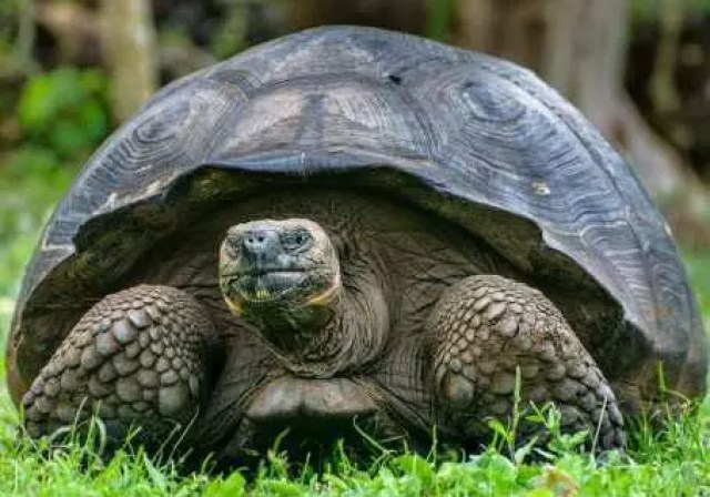 THE TORTOISE AND THE DRUM 2