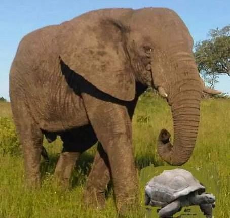 HOW THE TORTOISE OVERCAME THE ELEPHANT AND THE HIPPOPOTAMUS 1