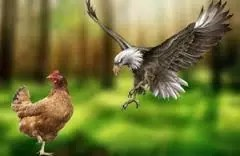 WHICH ARE YOU? AN EAGLE OR A CHICKEN 1