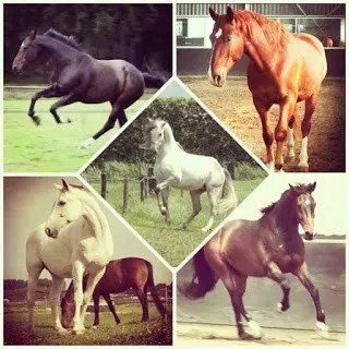 HORSES - BY VICTOR A. AFOLABI 1