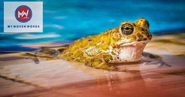Kick the frog