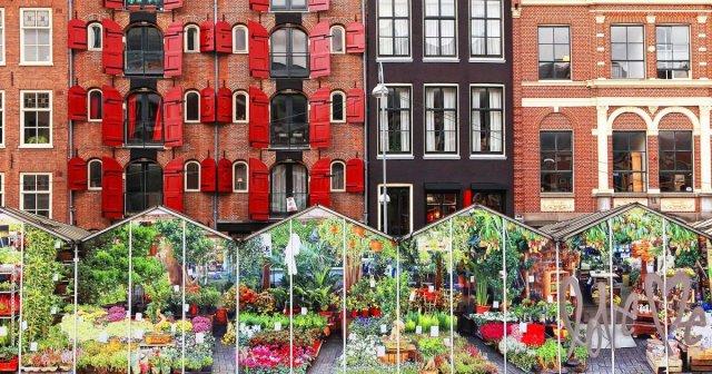 Imagini cu rezultate pentru BLOEMENMARKT, PIATA FLORILOR din Amsterdam