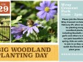 Join us Feb 29 to plant woodland plants in Wray Crescent