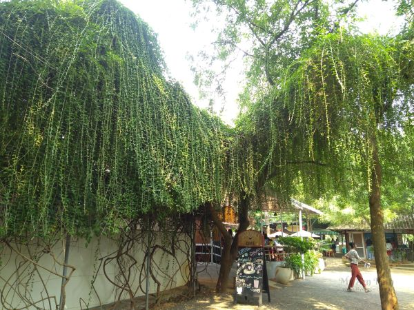 Dreamers Cafe Auroville