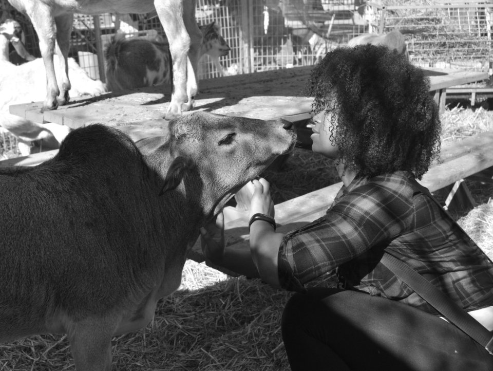 cow-rescue-animal-sanctuary-natural-hair
