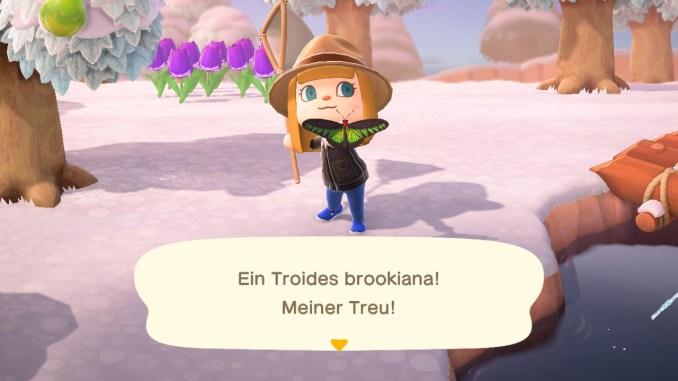 """Das Bild zeigt den Troides brookiana, den man nur noch im Februar in """"Animal Crossing: New Horizons"""" fangen kann, bevor er für ein paar Monate verschwindet."""