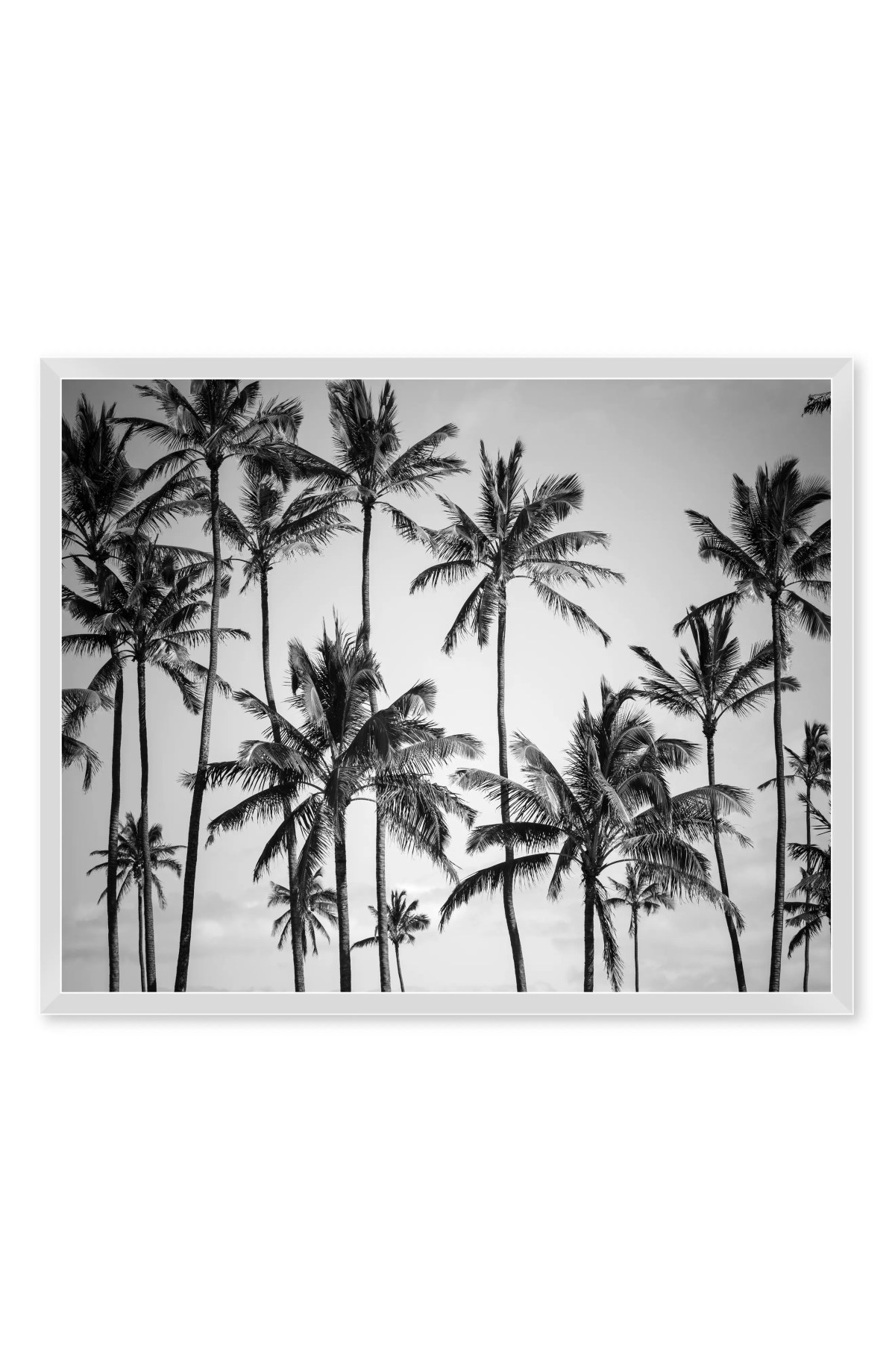 NEW ERA STUDIOS Palm Heaven I Framed Wall Art, Main, color, MULTI