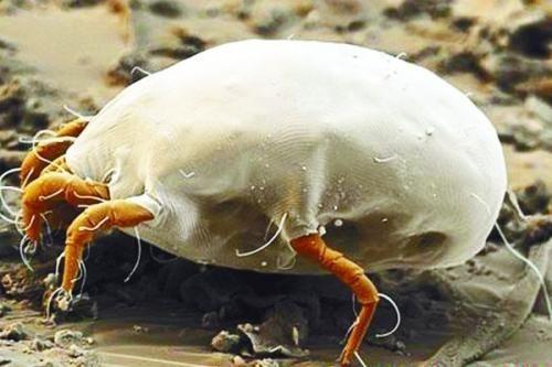 螨蟲長期在你臉上挖洞 你居然不自知?學會兩招將螨蟲殺光光!_新浪重慶_新浪網