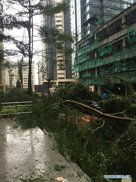 A tree is blown down by gale in typhoon-hit Xiamen City, southeast China's Fujian Province, Sept. 15, 2016. Typhoon Meranti made landfall in Xiamen in the early morning on Thursday. (Xinhua/Zheng Jun)