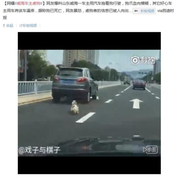 舒淇陳喬恩譴責威海車主虐狗
