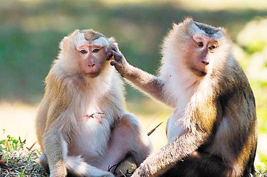 非法販賣野生猴子銷往全國各地 27人出庭受審|動物|保護|案件_新浪新聞