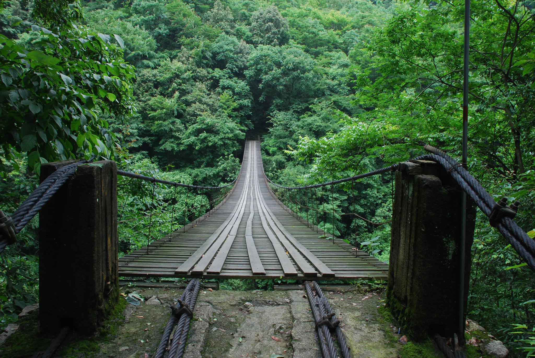 我國新增3條國家森林步道,途經25處國家級自然保護區|國家級自然保護區|大別山_新浪新聞