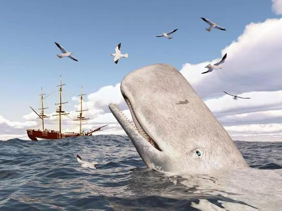 爲何科學家要從死鯨身上挖耳屎?_財經頻道_新浪網-北美