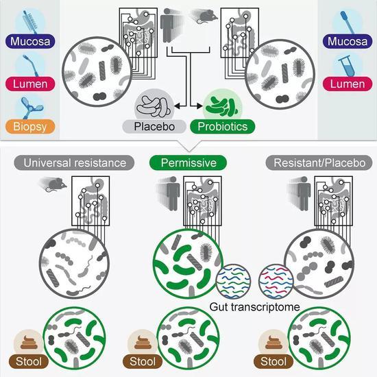 腸道菌群會怎樣影響健康?這些最新研究你一定要知道|微生物|益生菌|腸道_新浪科技_新浪網