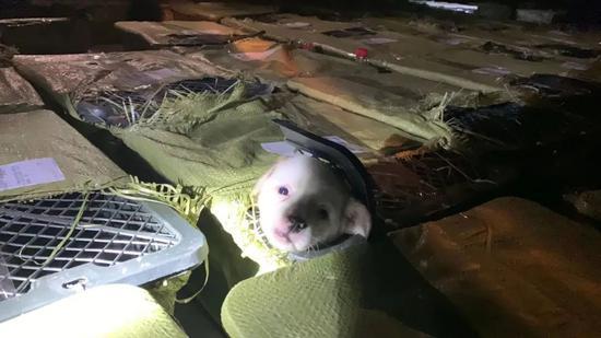 """""""死亡之旅""""中的小狗看到了""""生""""的曙光。"""