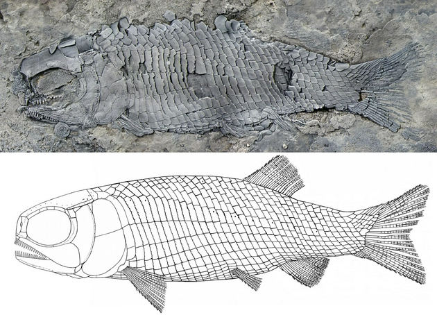 The world's oldest rib scale cleft toothed fish was found in Yunnan, the first in Asia