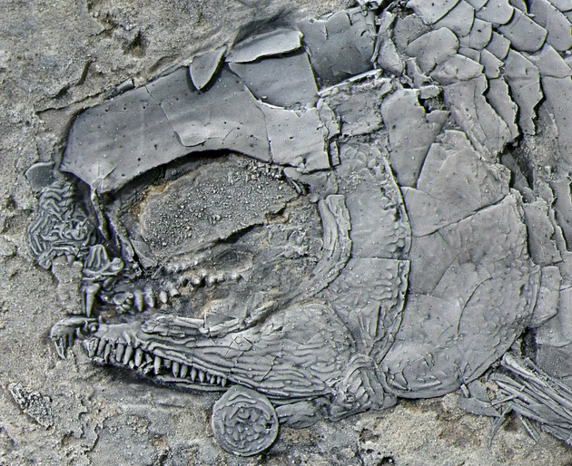 d002 41d5e07d0d8ff6facf3e02e237ba31b9 - The world's oldest rib scale cleft toothed fish was found in Yunnan, the first in Asia