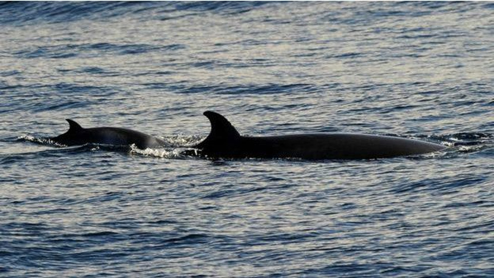 日本捕鯨船隊出發前往南極海域(高清組圖)|爭議|日本|捕鯨_新浪新聞