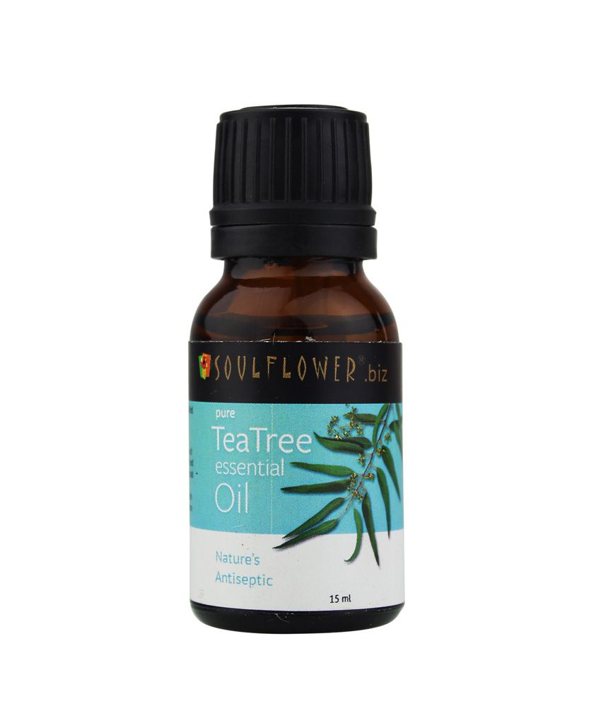 Image Result For Where Can You Buy Tea Tree Oil