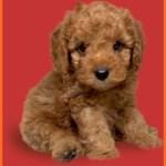 【chou chou 岡山店】ペットを売らないペットショップの素晴らしすぎる理由とは?