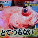 ベニアコウ幻の深海魚の正体!値段と驚愕の生態をまとめてみた!