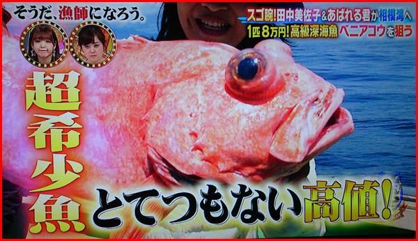 ベニアコウ 幻 深海魚
