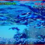 サンシャイン水族館世界初!「天空のペンギン」エリアはいつオープン?