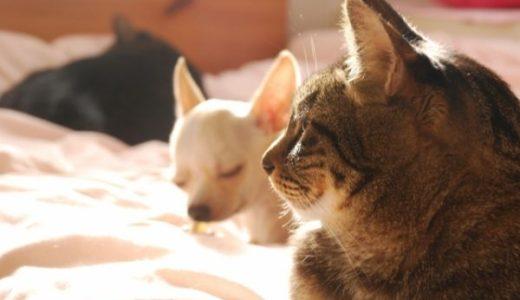 新型コロナウイルスはペットにうつるの?飼っている犬や猫や鳥や爬虫類への影響は?