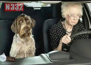 Carrying Pets in Cars