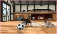 nintendogs_cats-2