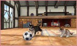 nintendogs_cats-2
