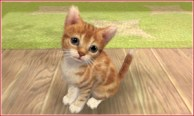 nintendogs_cats-3