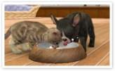 nintendogs_cats_r-3