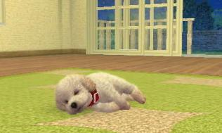 nintendogs__cats-15