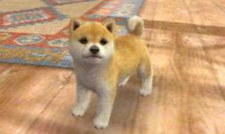 nintendogs__cats-4