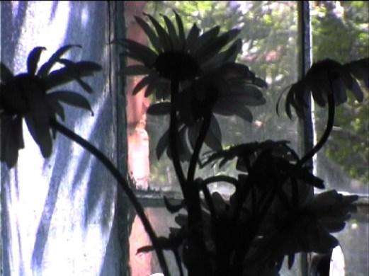 windowFlowersCU