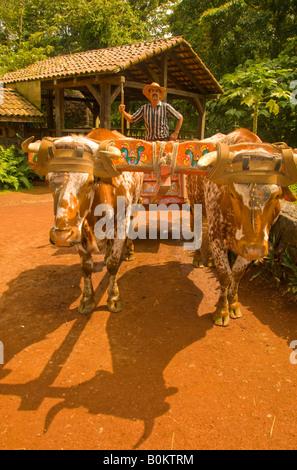 COSTA RICA Oxen Bulls pulling colorful Sarchi Ox Cart. Boyero Stock Photo. Royalty Free Image: 17927759 - Alamy